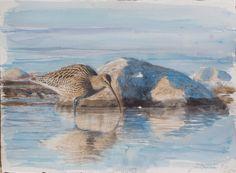 Museum Lars Jonsson - Lars Jonsson Bird Illustration, Museum, Landscape, Environment, Animals, Google Search, Board, Painting, Scenery