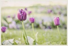 Spring (by Ana Elorza) Ana Elorza Photography