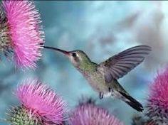 Resultado de imagen para paisajes con pajaros y flores