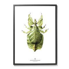 Plakat Owad | Hagedornhagen | Designzoo