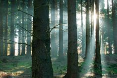 forest_sunlight.jpg 849×565 pixels