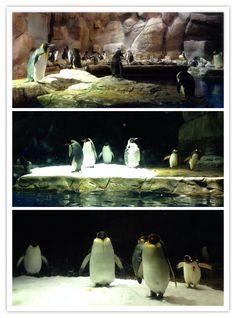 企鵝 Ocean Park, Animals, Animales, Animaux, Animal, Animais