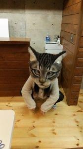 羊毛フェルト製「リアル猫ヘッド」   猫人形の部屋!とりあえず寝る…