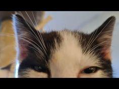 KITTENS - YouTube Kittens, Cats, Art World, Youtube, Action, Animals, Cute Kittens, Gatos, Animales