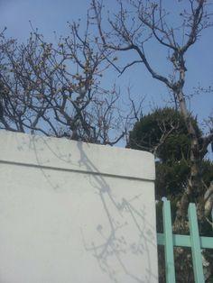2014 년 3월. 어느 동네에 들어와 있는 꽃망울과 봄볕