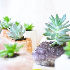 The Finders Keepers | Featured Product: Crystal Planters by Terrariums By Bella