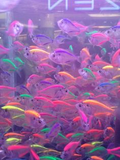 fish, neon, and colors image Aesthetic Indie, Rainbow Aesthetic, Aesthetic Collage, Purple Aesthetic, Bedroom Wall Collage, Photo Wall Collage, Picture Wall, Aesthetic Pastel Wallpaper, Aesthetic Backgrounds