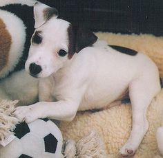 JRT Pup <3 with soccer ball! :]