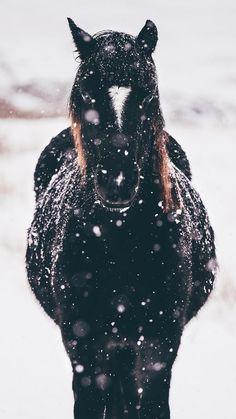 Pretty black horse in the snow - # pretty .- Hübsches schwarzes Pferd im Schnee – Pretty black horse in the snow – the - Horses In Snow, Black Horses, Cute Horses, Horse Love, Wild Horses, Beautiful Horse Pictures, Most Beautiful Animals, Beautiful Horses, Horse Background