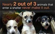 This is a shameful statistics. Let's see if 2014 can be a good year for animals in Shelters