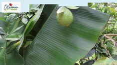 Tropîcal garden! Tropical Garden, Agriculture, Plant Leaves, Make It Yourself, Plants, Gardens, Tropical Gardens, Plant, Tropical Landscaping