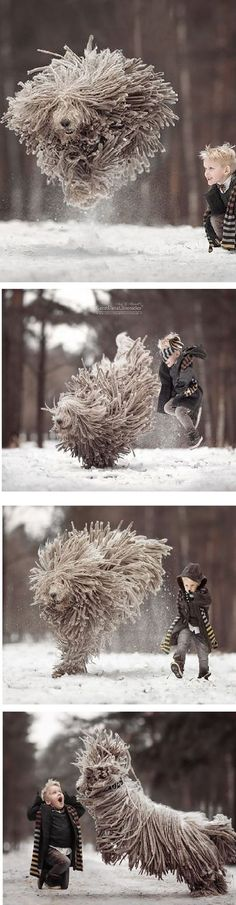 This Giant Furry Dog Playing With A Kid Will Make Your Day #by Andy Seliverstoff on www.boredpanda.com