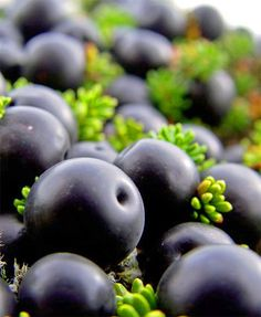 Arctic Crow Berries. They are used as natural food dye, in making pie and jelly.