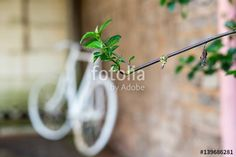 A Bike and a plant - Buy this stock photo and explore similar images at Adobe Stock Royalty Free Photos, Bike, Stock Photos, Marketing, Plants, Projects, Image, Bicycle, Log Projects