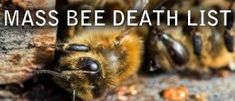 Worldwide Bee Die offsMass Animal Deaths for 2015 If the information on this page causes you concern regarding the future, then see what must I do to be saved?  Below is a list of worldwide mass animal deaths for 2015, with pages also for mass die offs from the previous 4 years. There are animals dying all over the world today in huge numbers, due to the polluted state of the sea and air. Millions of Fish and massive numbers of whales and dolphins are washing ashore dead. Birds are falling…