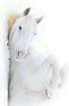"""In Case You Were Wondering: This is a GRAY horse because their skin is gray; WHITE horses have pink skin. All The Pretty Horses, Beautiful Horses, Animals Beautiful, Cute Horses, Horse Love, Gray Horse, Animals And Pets, Cute Animals, Majestic Horse"