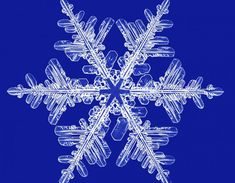 Depending on the temperature and humidity of the air where the snowflakes form, the ice crystals can grow into a myriad of different shapes. Winter Wallpaper, Christmas Wallpaper, What Is A Snowflake, Real Snowflakes, Snowflake Wallpaper, Snowflake Pictures, Christmas Elf Costume, Holly Blue, Snowflake Jewelry