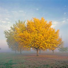 Autumn Leaves: 5 Photography Tips from Adorama Learning Center