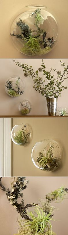 """DIY Wall Vases With Air Plants ~ how to make an """"aerium,"""" i.e., a  terrarium for air plants from Lifestyle for Everybody"""
