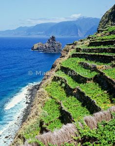 Vineyards in the north coast of Madeira island. Portugal | Mauricio Abreu, Images of Portugal