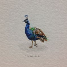 Day 239 : Timid peacock. 20 x 26 mm. #365paintingsforants #watercolor #miniature…