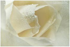 White Rose Bloom Close Up with Texture Wall Art Giclée by McAnany