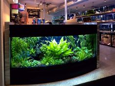 Planted aquarium ideas.