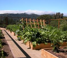 Raised bed gardens from Houzz app