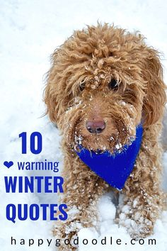 Ready for some winter weather happiness? Cuddle up with your dog and enjoy these 10 winter quotes,  literary quotes, and some new dog lovers quotes paired with snowy dog adventures. Because any day (even blustery wintry ones) spent with our dogs is a happy adventure.   #winterquotes #wintersayings #winterweather