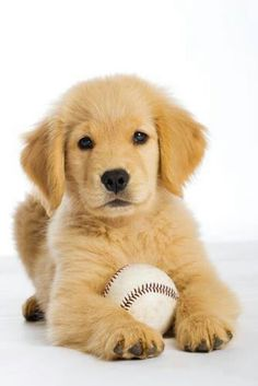 Goldens love a good ball game ! Fletcher and my Dad will show me how to play.