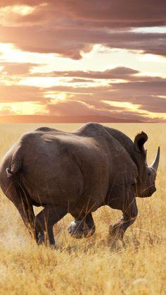 Rhino Dawn