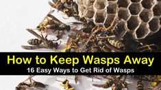 Learn how to keep wasps away, getting rid of wasps, and making wasp repellent. We discuss natural pest control and methods that work to keep wasps away. Get Rid Of Wasps, Bees And Wasps, Types Of Bugs, Types Of Insects, Bug Control, Pest Control, Getting Rid Of Bees, Wasp Repellent, Wasp Stings