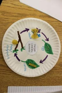 life cycle of a butterfly using pasta shapes I have done this using paper but I like it on a plate!