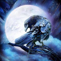 The Raven, Raven Bird, Crow Or Raven, Crow Art, Bird Art, Rabe Tattoo, Jackdaw, Crows Ravens, Illustration