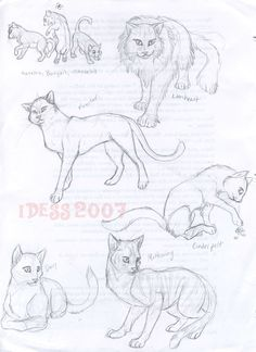 warrior cats-kits, queens, medicine cats, leaders, and warriors