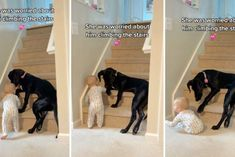 Nanny Dog, Kevin Bacon, Pet Paws, Past Life, New Parents, I Love Dogs, Best Dogs, Climbing, Stairs