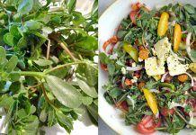Buruiana-minune pe care noi o aruncăm e folosită de străini în salate și medicamente. Iată 5 proprietăți miraculoase Omega 3, Home Remedies, Green Beans, Spinach, Health And Wellness, The Cure, Projects To Try, Herbs, Vegetables