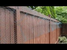 Cat Proof Backyard Attach To Fence So Cats Can T Leave