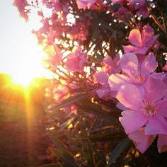 Coaching Tipps für Unternehmen : Thema: GRÜNDUNG und SELBSTÄNDIGKEIT . Sonnenaufgang mit Blüten