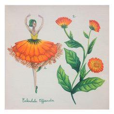 Remedio para la fiebre #9 2. 5 gramos de flor de caléndula.  https://www.facebook.com/media/set/?set=a.874514409232134.1073741836.283976048285976&type=1