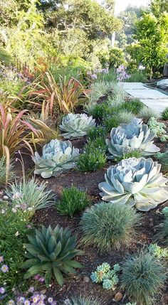 Bed Ideas, Summer Garden, Succulents Garden, Arizona Gardening, Fence  Landscaping, Garden Beds, Desert Landscape, Water Gardens, Garden Design
