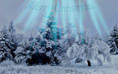 Snow at Shipka Merry Christmas - tree, christmas, xmas, snow at shipka merry christmas