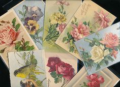 12 Vintage Catherine Klein Postcards ~ Flowers , Roses, Etc.Early 1900's -ggg260