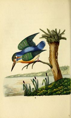 https://flic.kr/p/tei16X | n103_w1150 | The language of birds :. London :Saunders and Otley,1837.. biodiversitylibrary.org/page/47512045