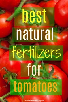 The best natural fertilizers for tomato plants Tips for fertilizing tomatoes and the best natural fertilizer for tomatoes. My favorite DIY tomato plant foods for growing bigger and healthier tomatoes. Tips For Growing Tomatoes, Growing Tomato Plants, Growing Vegetables, Gardening Vegetables, Tomato Fertilizer, Fertilizer For Plants, Organic Fertilizer, Tomato Plant Food, Tomato Garden