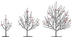 Curatarea pomilor fructiferi - Cum si cand se face? Dandelion, Hair Accessories, Face, Plants, Google, Home Decor, Decoration Home, Room Decor, Dandelions