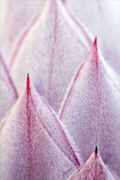 Pink Slopes by Josie Eldred on 500px