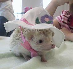 Tal vez las cosas serían más fáciles como una belleza sureña! | 25 Hedgehogs Trying To Escape Their Identity
