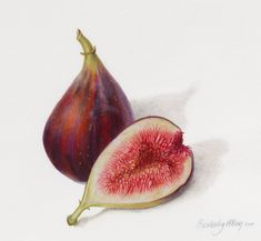Beverly Allen Ficus carica Figs Watercolour on vellum Watercolor Fruit, Fruit Painting, Watercolor Paintings, Watercolours, Botanical Drawings, Botanical Prints, Sibylla Merian, Fig Fruit, Food Illustrations