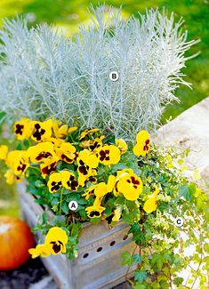 Liven up your fall garden with these stunning container garden ideas. Get creative with seasonal favorites such as mums, flowering kale, and pansies, or play with dynamic combinations of annuals, perennials, and grasses that also make excellent fall container plants. #fallcontainergarden #containergardenplans #fallgardening #flowerpots #bhg Fall Container Plants, Fall Containers, Container Flowers, Container Gardening, Succulent Containers, Vegetable Gardening, Succulents, Fall Flowers, Colorful Flowers